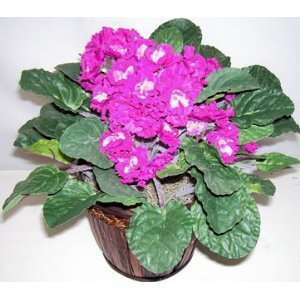 Giant African Violet Bush (Magenta): Home & Kitchen