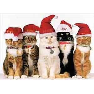 Five Cats In Santa Hats Christmas Cards: Home & Kitchen