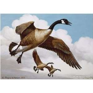 Maynard Reece   Coasting Down Canada Geese Artists Proof: