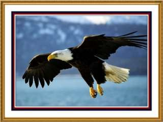 American Bald Eagle Flight USA Bird Counted Cross Stitch Chart