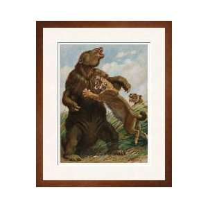 No Match For The Saber Tooth Tiger Framed Giclee Print