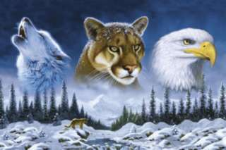 American Wildlife (Wolf, Cougar, Bald Eagle) Art Poster Print Prints