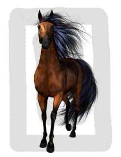 WILD HORSES PONIES PONY STALLION WALL STICKERS DECALS