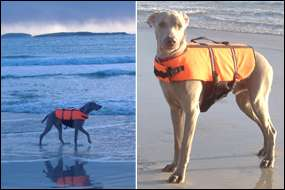 GIANT (Extra large) size DOG LIFE JACKET buoyancy aid